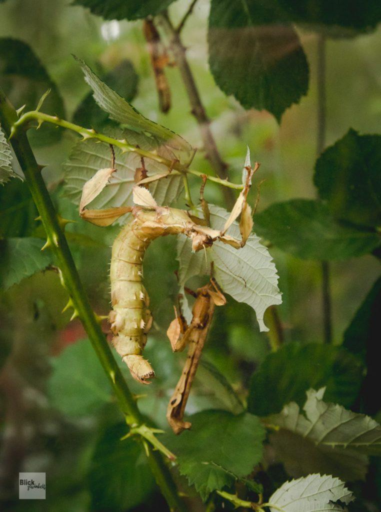 Insekten-Versteckspiel