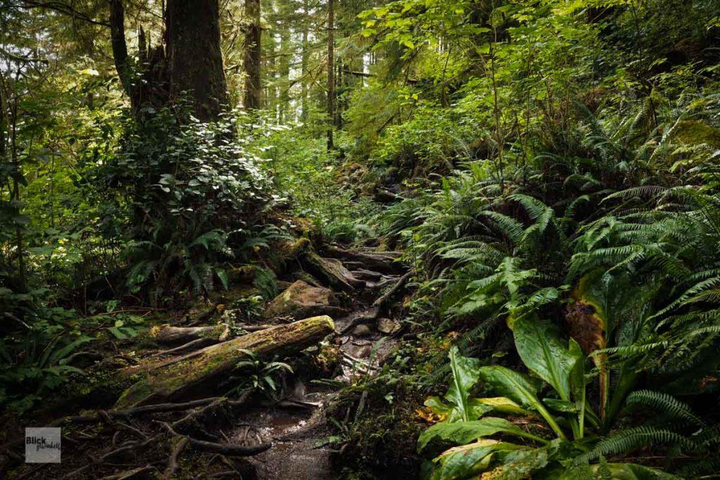 Regenwald in Kanada