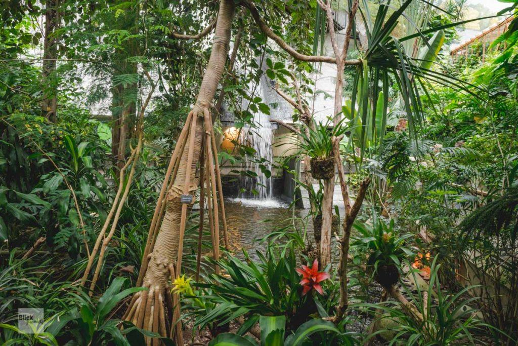 Regenwald in der Biosphäre Potsdam