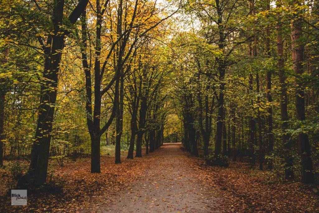 Berliner Grunewald in Herbstfarben