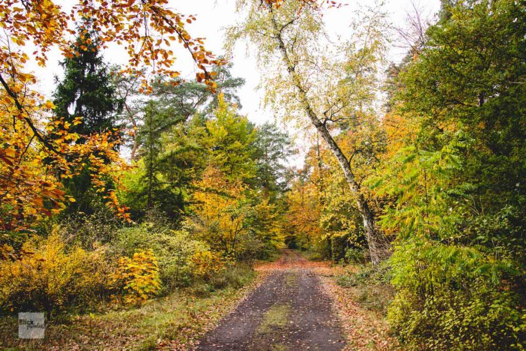Herbstwald auf dem Friedhof