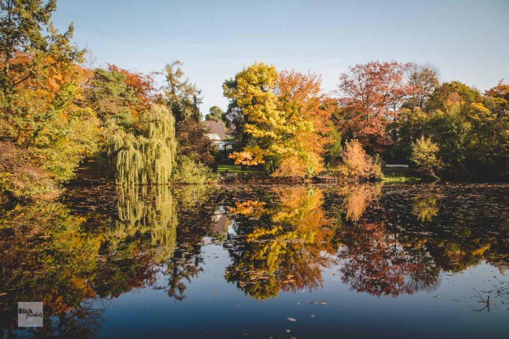 Seespiegelung von Bäumen im Herbst