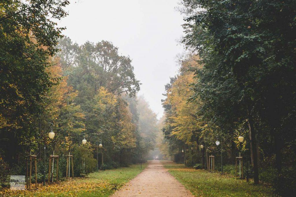 Vernebelter Tiergarten im Herbst.