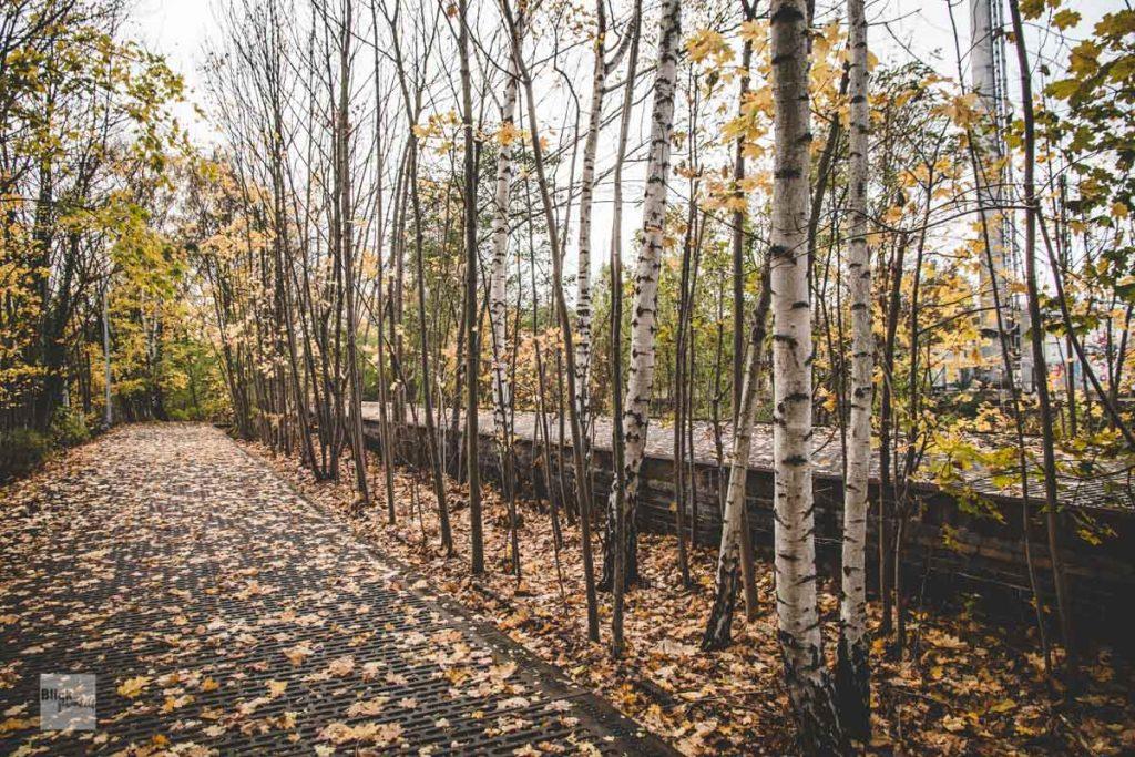 Zugewachsene Gleise am Mahnmal