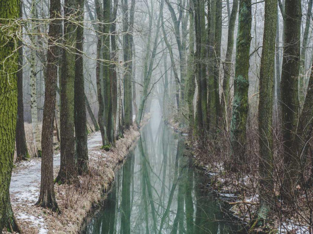 Spiegelung des Waldes in Wasserkanälen