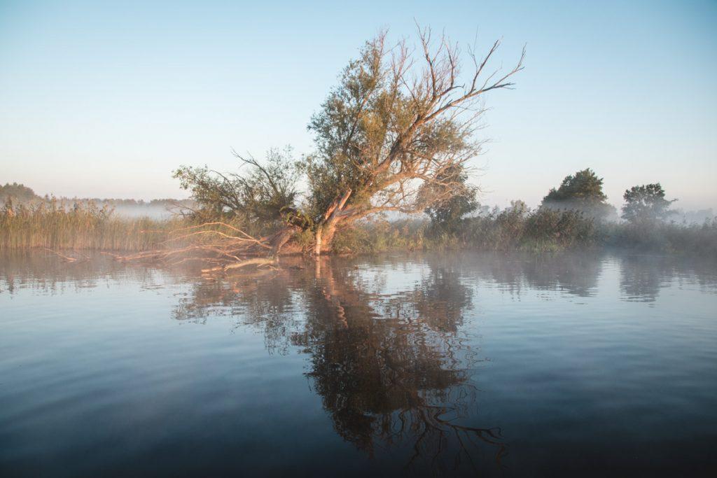 Morgennebel über Wasser
