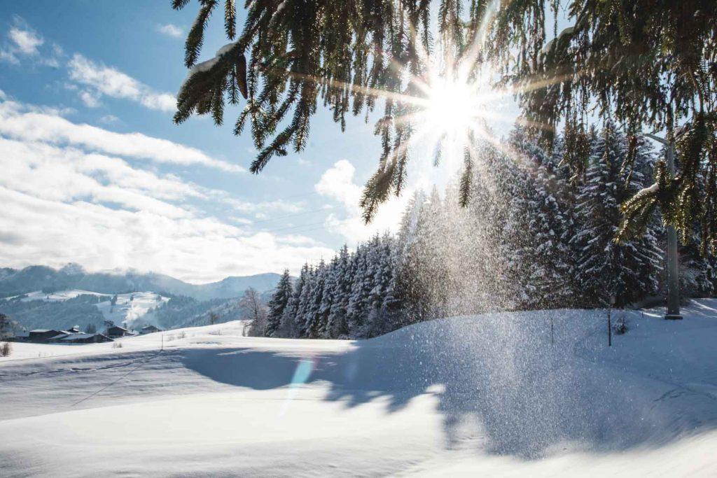 Sonnenstern im Schnee