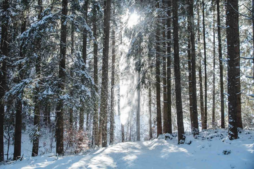 Winterbild Winterwald