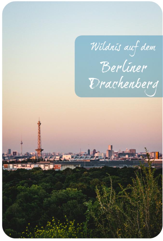 Wildnis auf dem Drachenberg Berlin