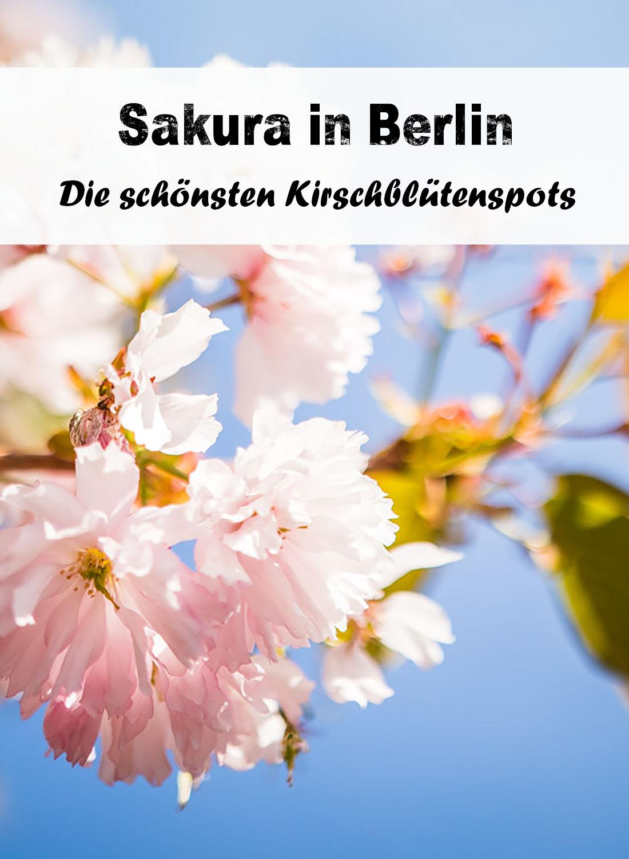 Die schönsten Kirschblütenspots in Berlin