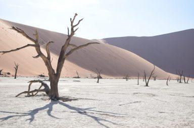 Namibia Deadvlei - tote Akazienbäume in der Salzpfanne