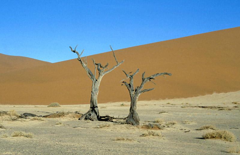 Toter Baum vor Sanddüne