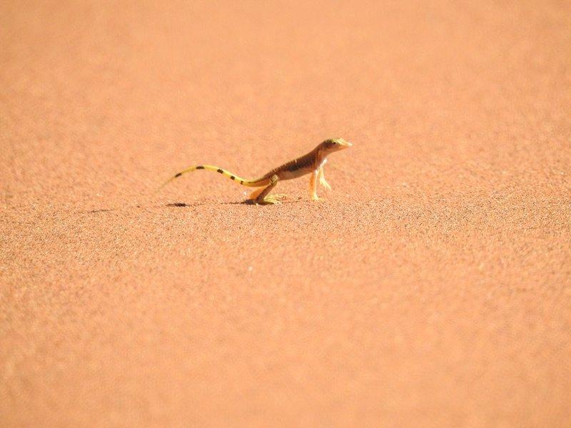 Kleines Wüstengetier