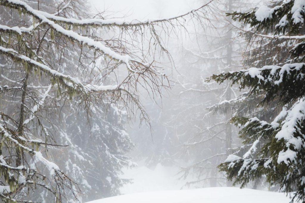 Verschneiter Tannenwald