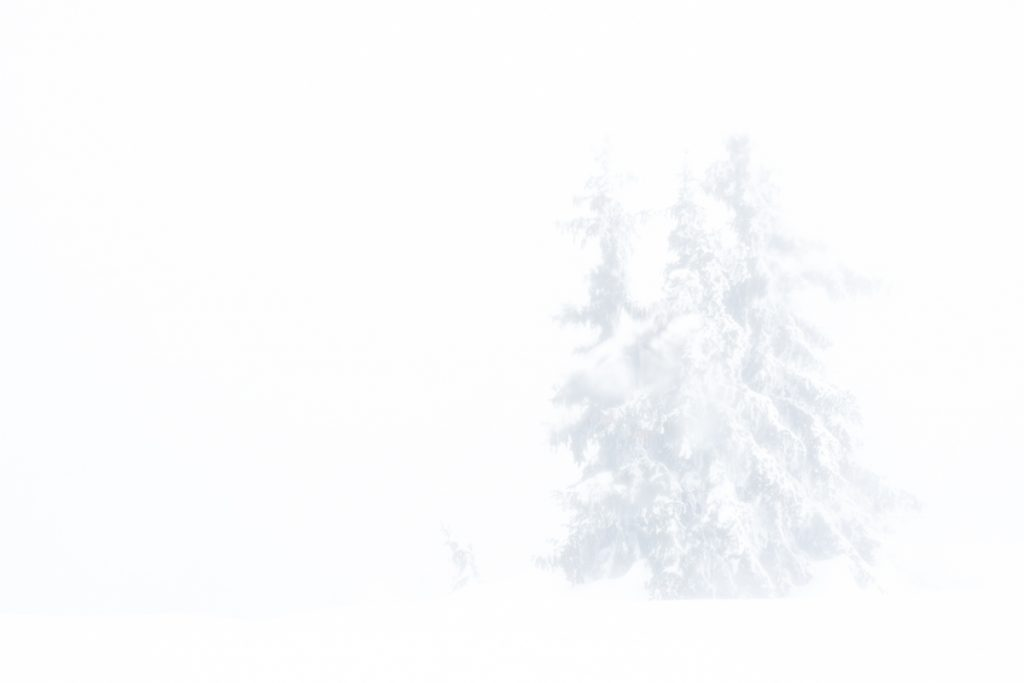 Whiteout in den Bergen