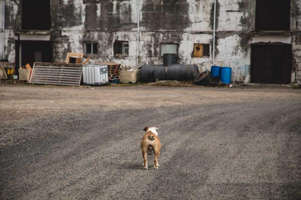 Hundehintern