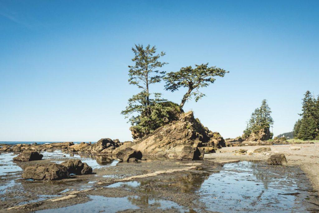 Baumwuchs an der Küste