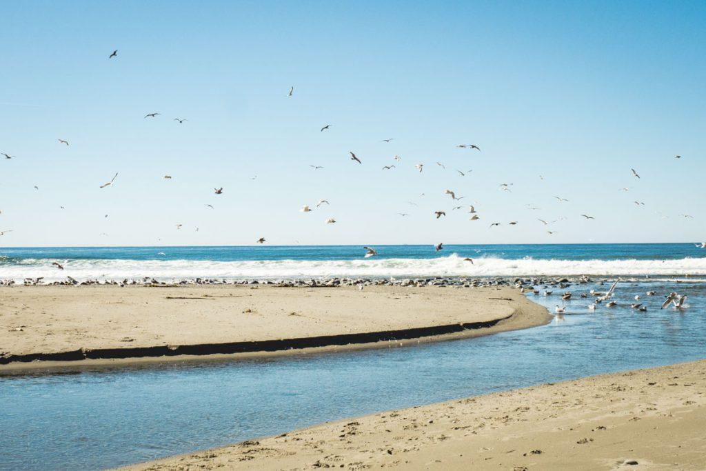 Möwen an der Küste in einem Priel
