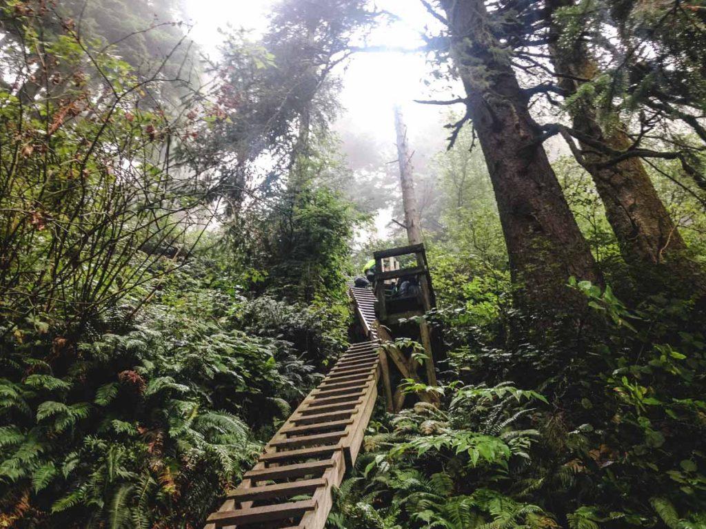 steile Holzleitern