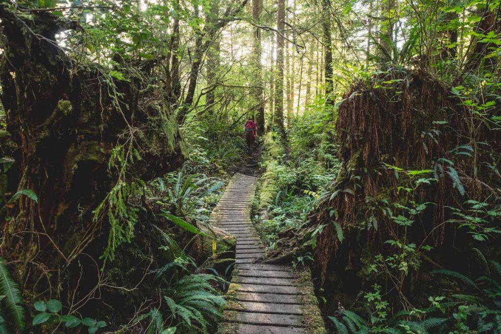 Küstenregenwald Vancouver Island