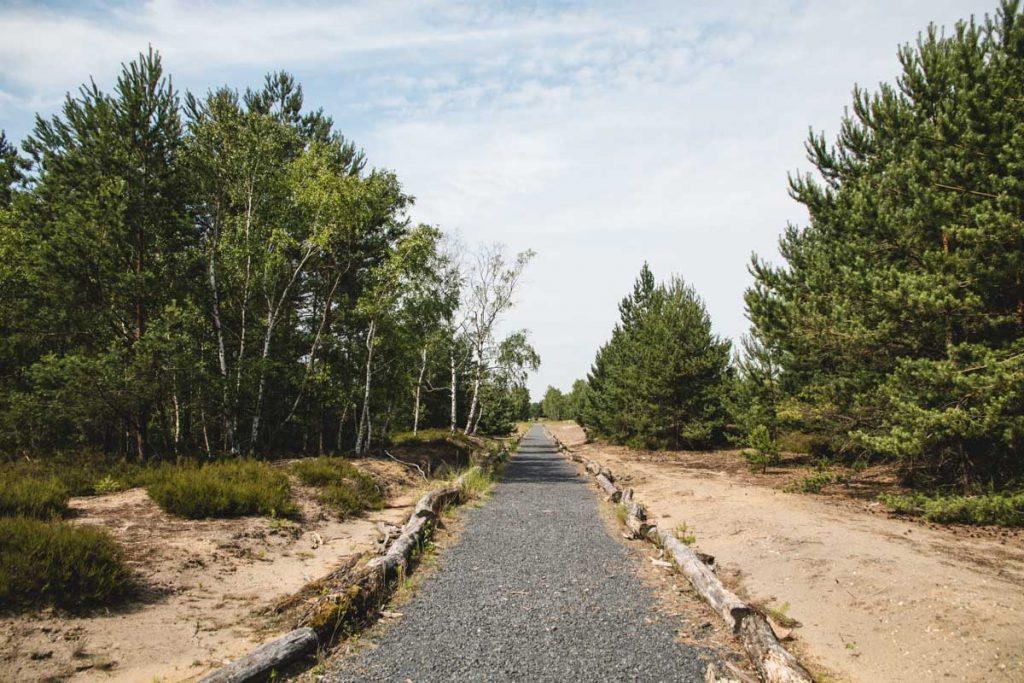Garge Landschaft mit Heide und Kiefern
