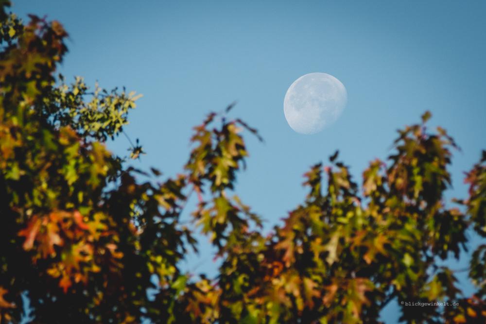 Mondbild am Tag mit Herbstfarben