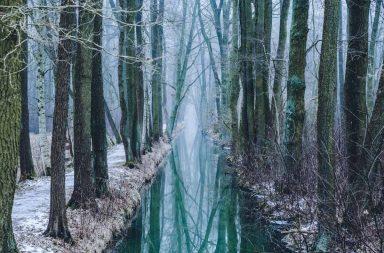 Gespiegelte Bäume im Wasser