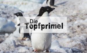 DIE TOPFPRIMEL, Premium Edition 2018