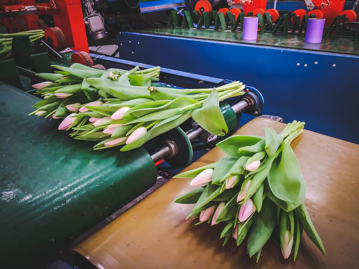 Gebündelte Blumensträuße