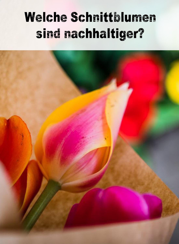 Welche Schnittblumen sind nachhaltiger?