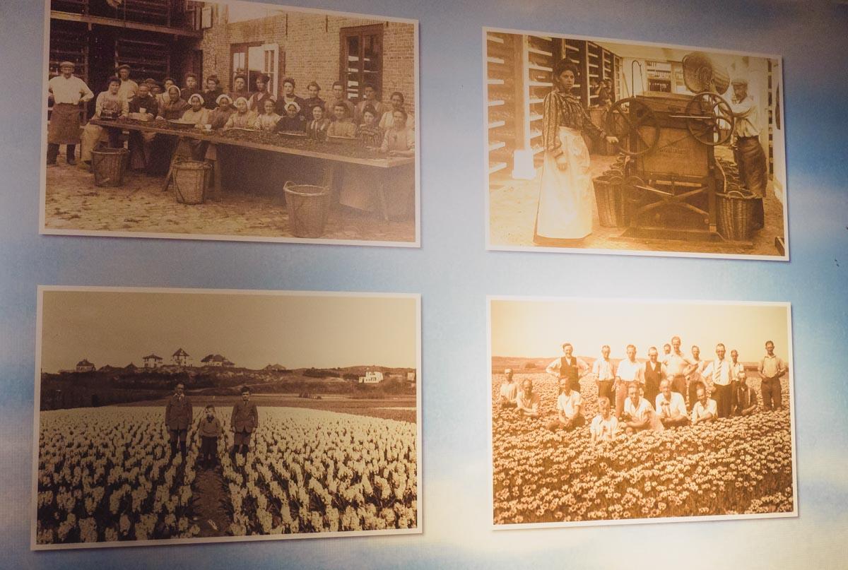 Alte Fotos von Tulpenbauern in den Niederlanden