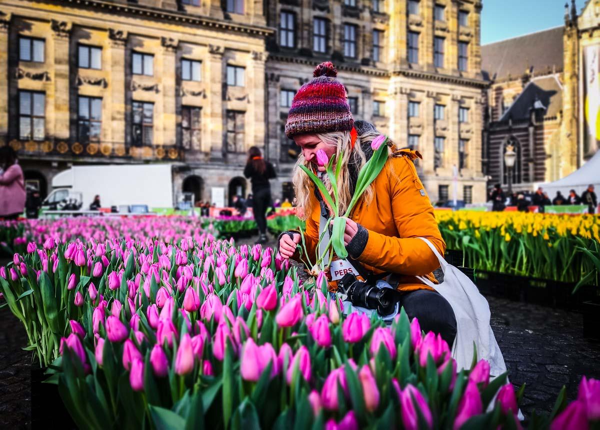 Tulpenpflücken