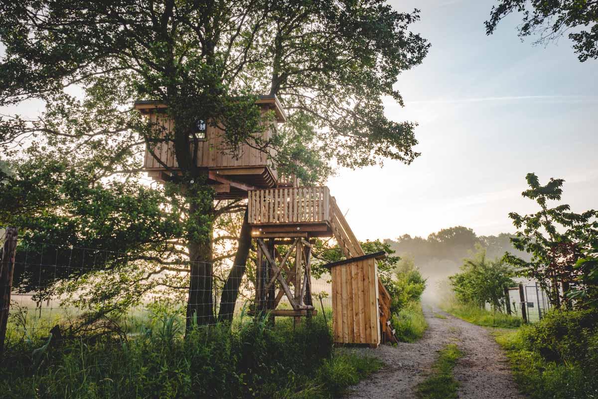 Baumhaus im Morgenlicht