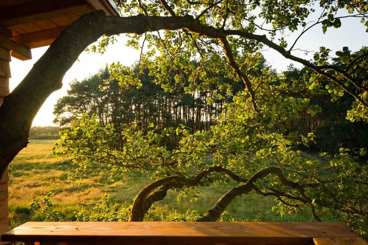 Abend auf der Baumhaus-Terrasse