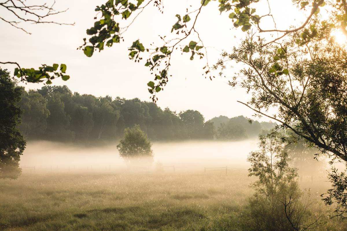 Morgennebel auf der Wiese