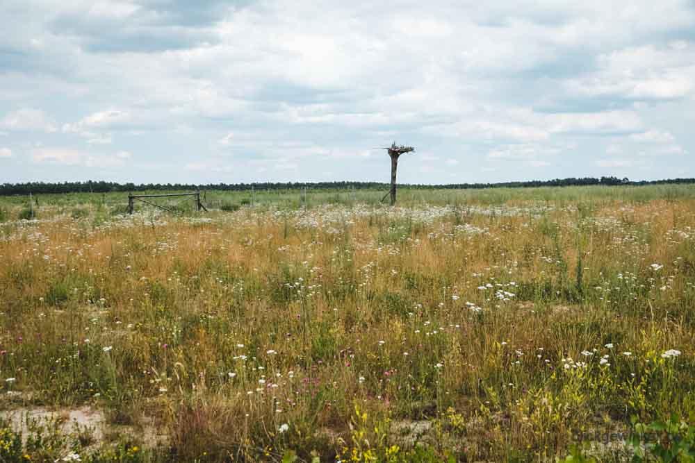 Tagebau-Folgelandschaft Wiese Brandenburg