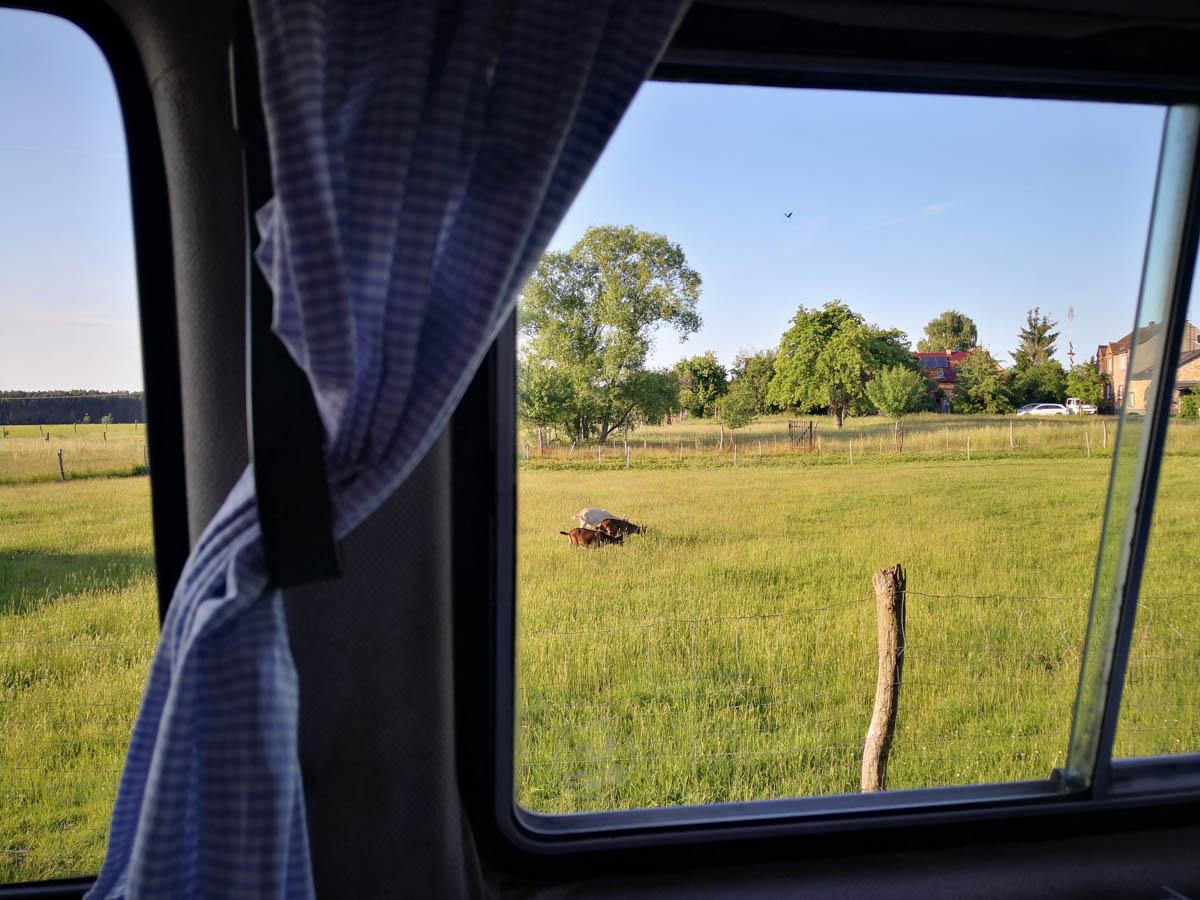 Ziegenwiese aus dem Bullifenster