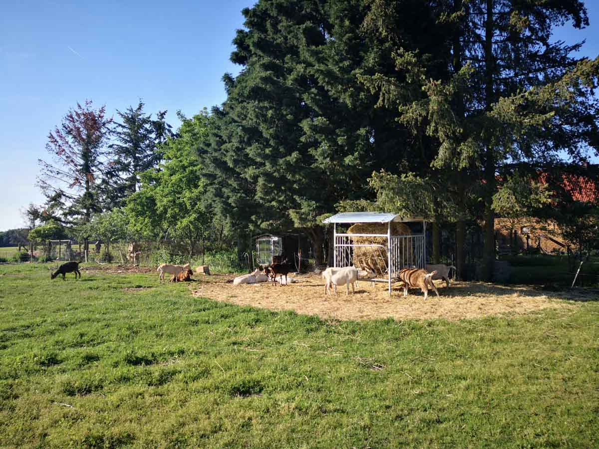 Stellplatz auf einem Ziegenhof