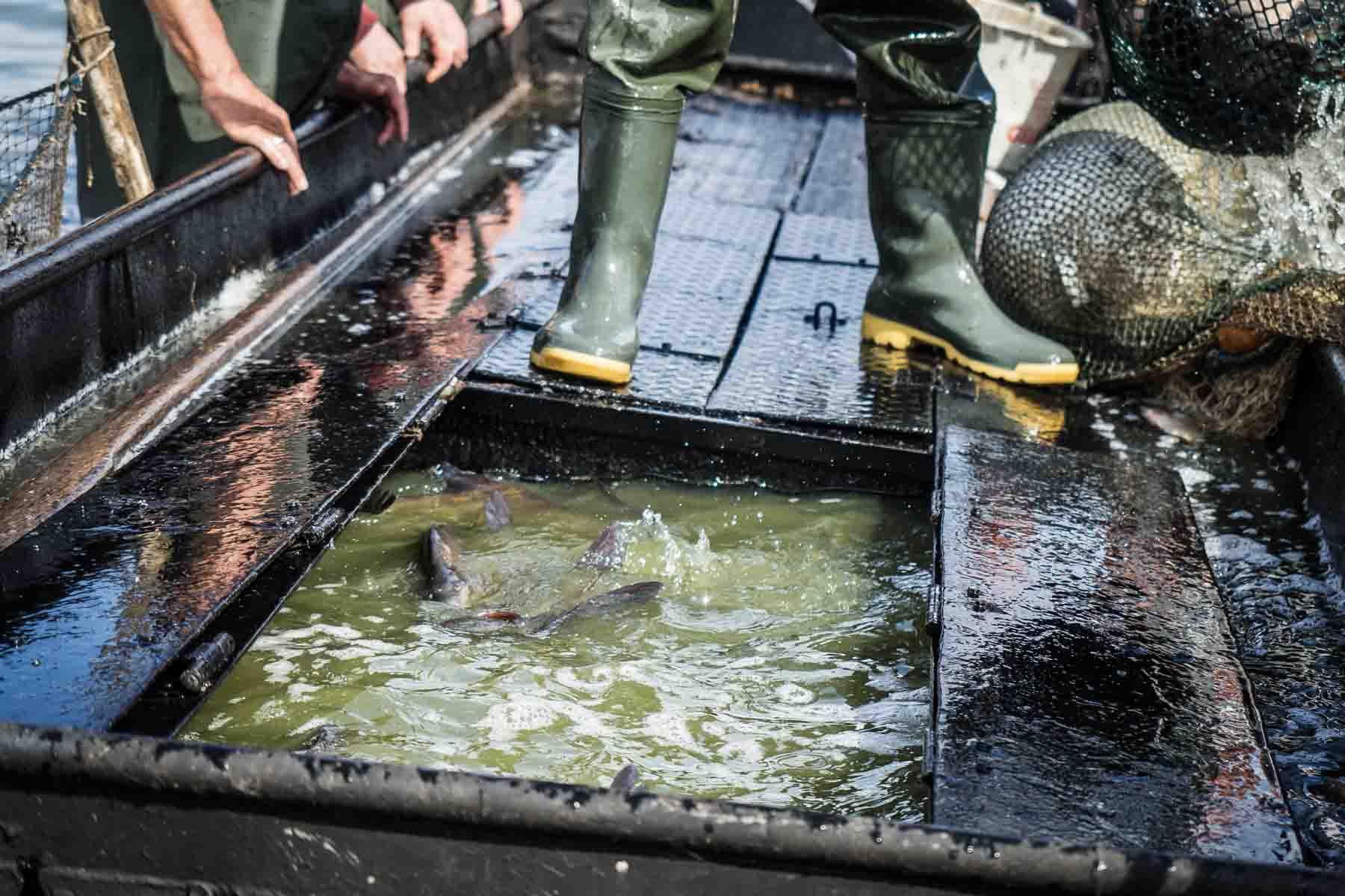 Boot mit Fischen