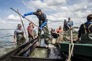 Netzfischen im Elb-Havel-Winkel: Mit dem Fischer auf dem Gülper See