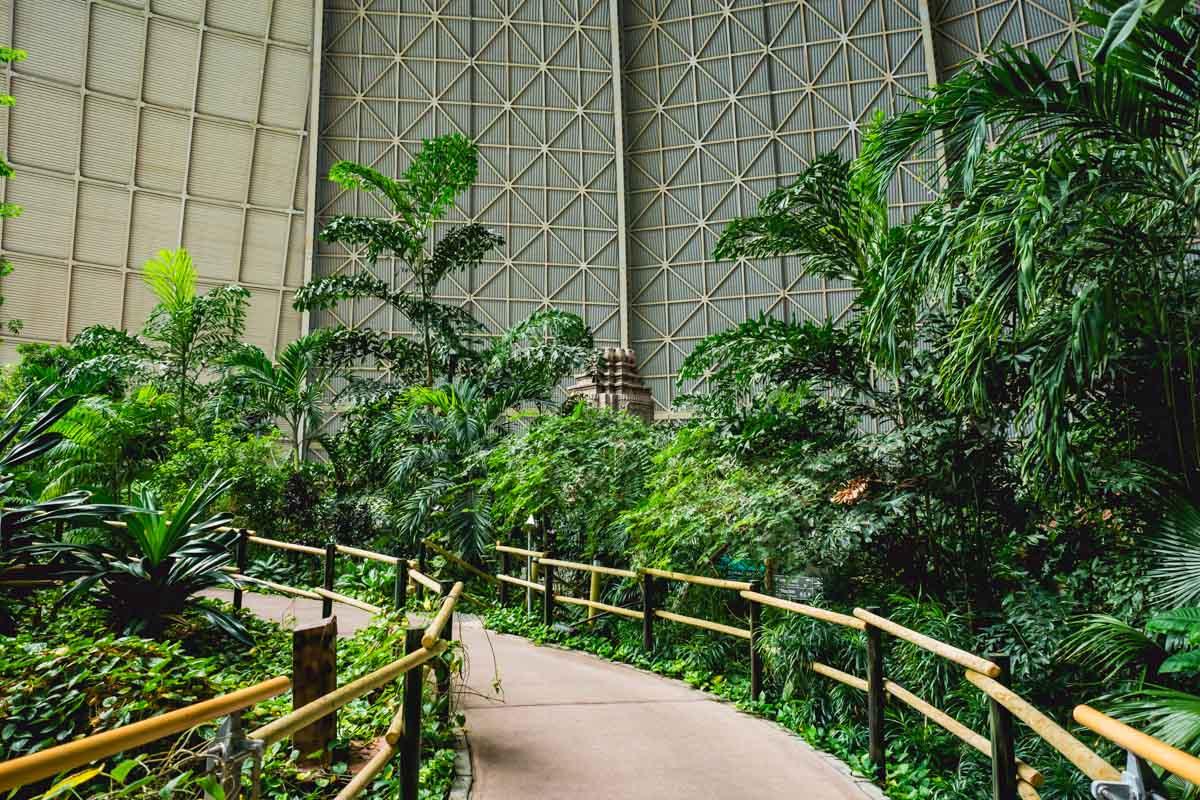 Dschungelpflanzen Tropical Islands