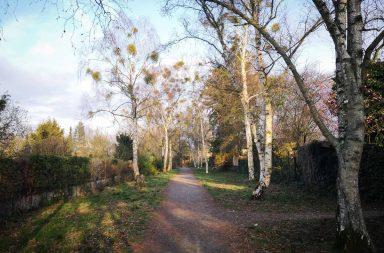 Coronatagebuch - Spazierweg