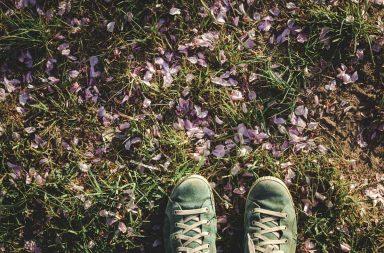 Kirschblütenblätter auf dem Boden