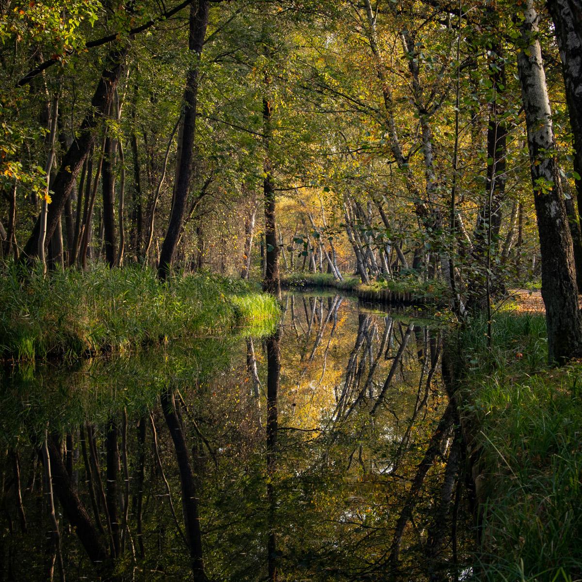 Wasserlandschaft-Spreewald