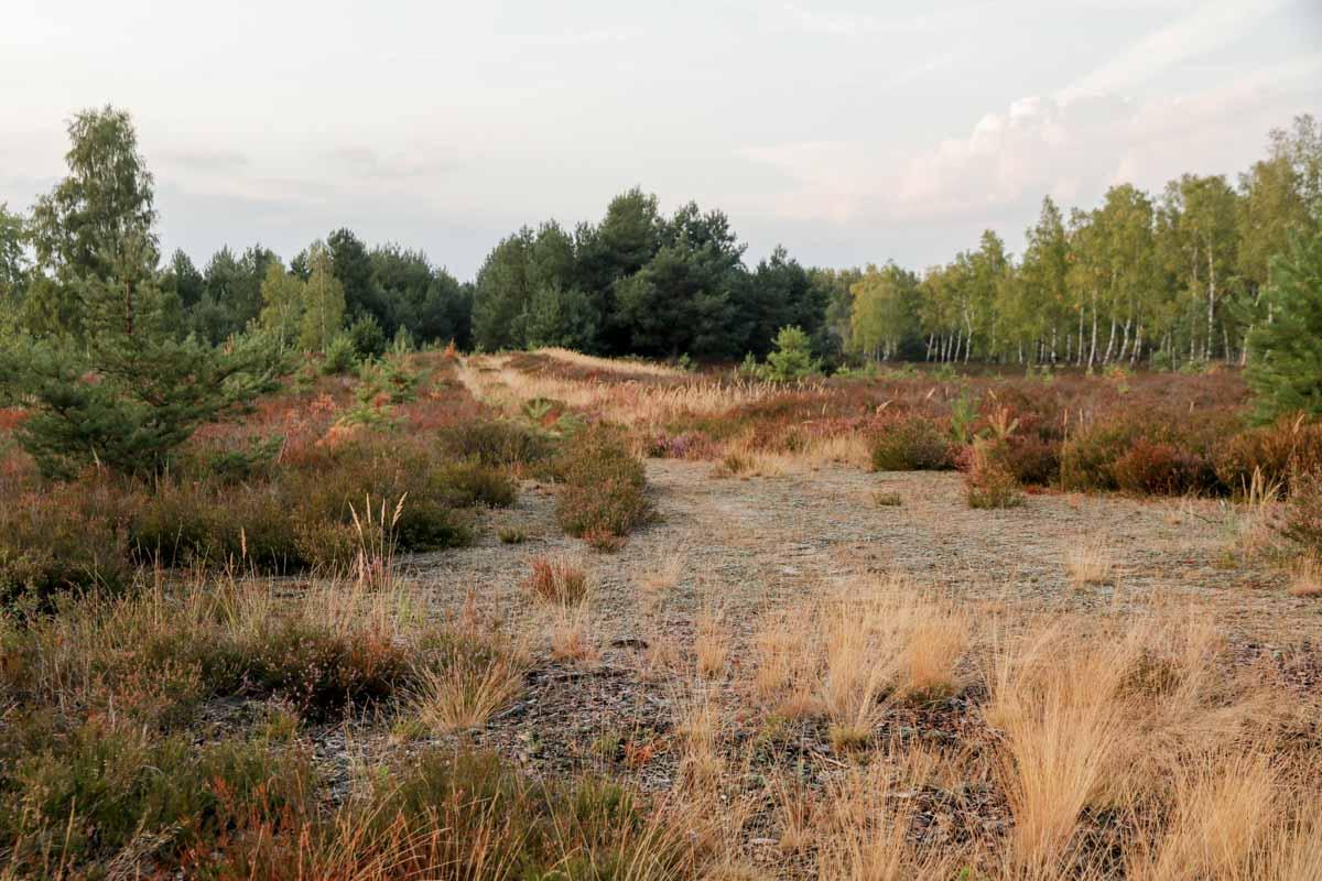 Heidelandschaft Brandenburg der Loben