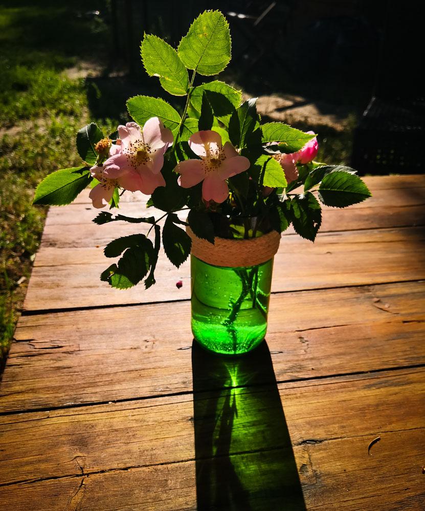 Vase mit Rosen im Sonnenlicht